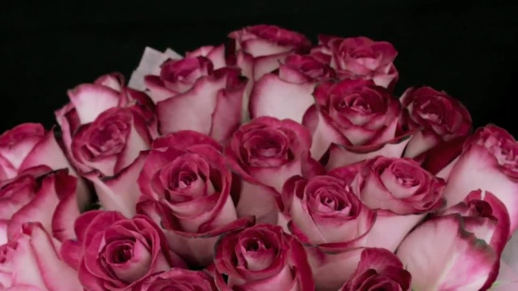 Bouquet Of Pink Rose Buds: Stock Video