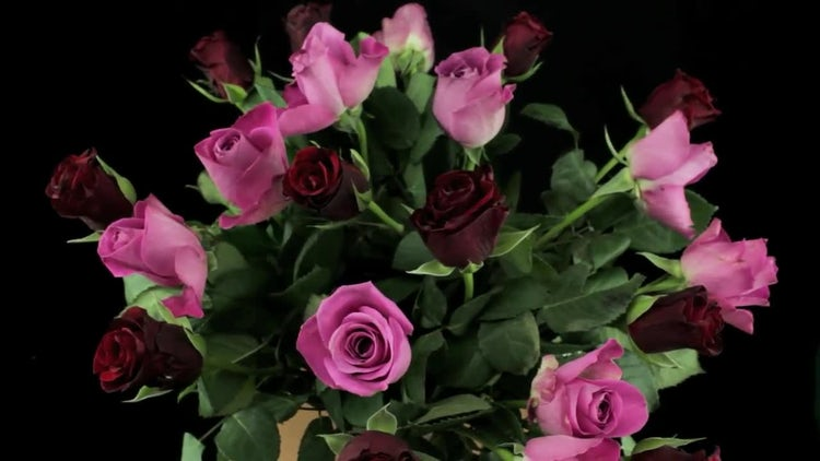 Rotating Roses Bouquet: Stock Video