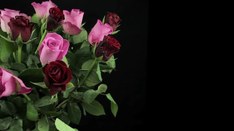 Red And Pink Roses Bouquet : Stock Video