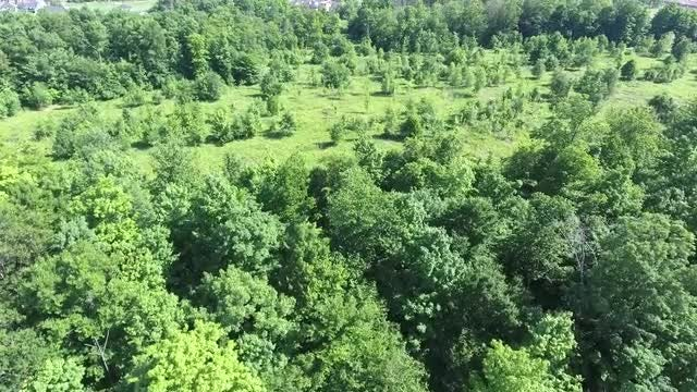 Aerial View Of Green Forest: Stock Video