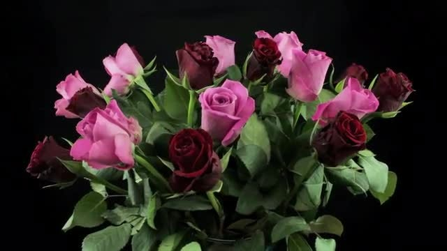 Red And Pink Roses Rotating: Stock Video