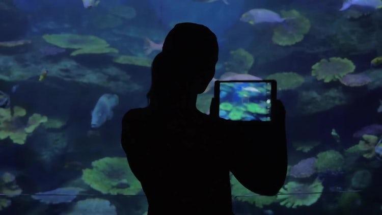 Woman Taking Photos Of Aquarium: Stock Video