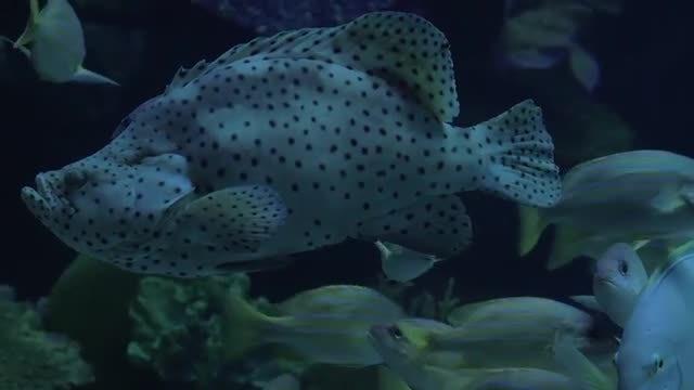 Diverse Fish Swimming In Aquarium: Stock Video