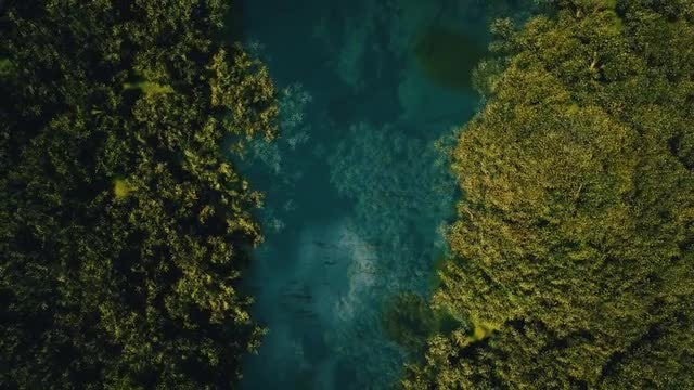 From The Lake To The Jungle: Stock Motion Graphics