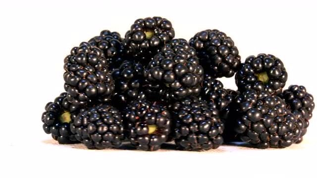 Blackberries Rotating Loop: Stock Video