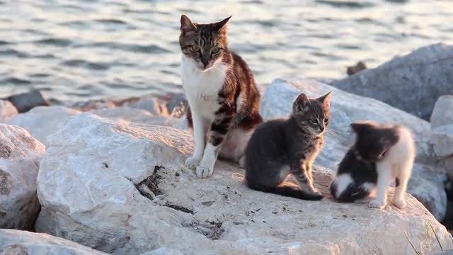 Cats Relaxing On The Beach: Stock Video