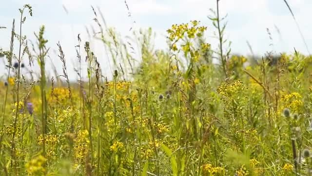 Green Grass And Wild Flowers : Stock Video