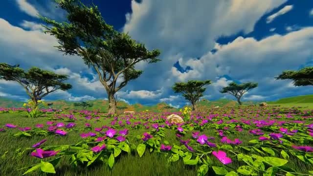 Green Field With Beautiful Flowers : Stock Motion Graphics