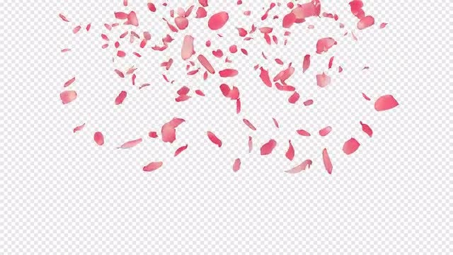 Falling Rose Petals : Stock Motion Graphics