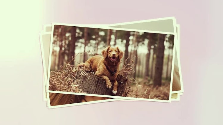 Photo Opener: After Effects Templates