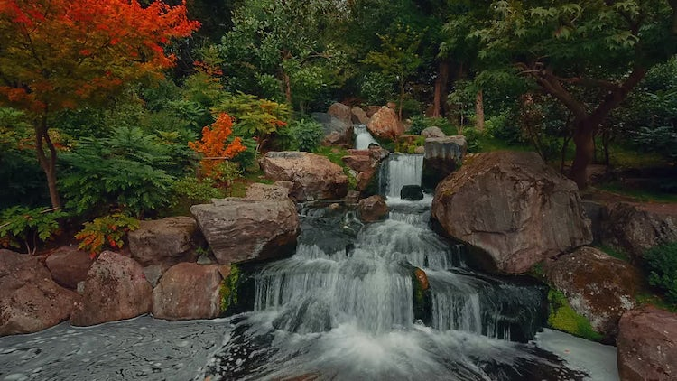Lush Japanese Garden With Waterfall: Stock Video