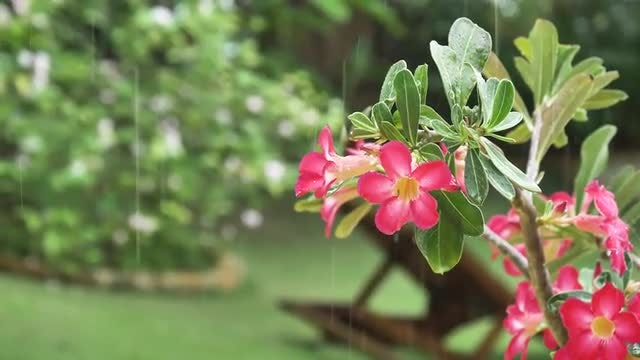 Close-up Of Rain On Flowers : Stock Video