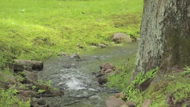 Small Stream In Green Park : Stock Video