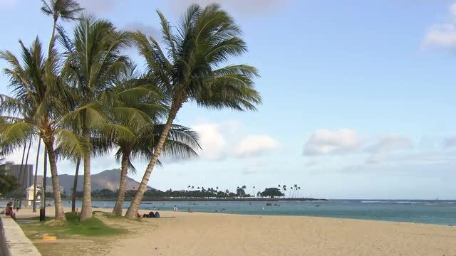 Beautiful Beach With Palm Trees: Stock Video