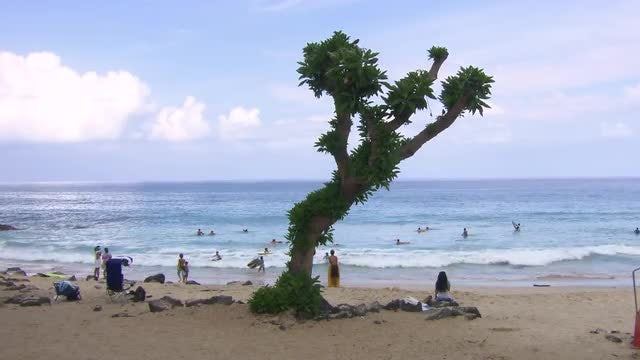 Crowded Beach With Cool Tree: Stock Video