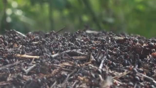 Busy Ants: Stock Video