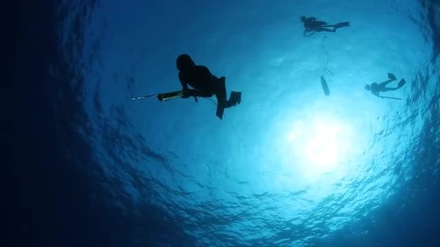 Free Divers Diving Down: Stock Video