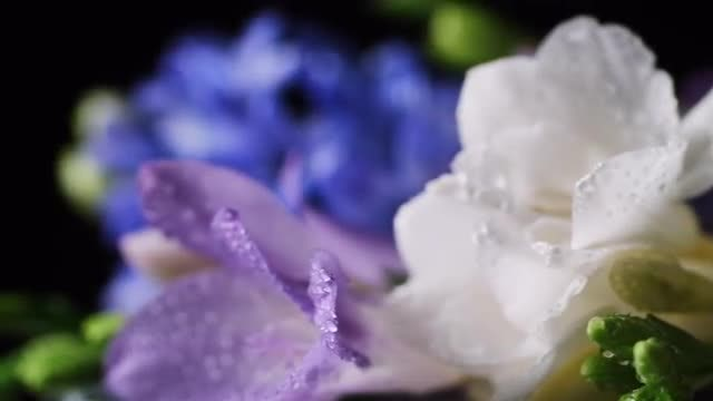 Close-up Of Bouquet Of Flowers: Stock Video