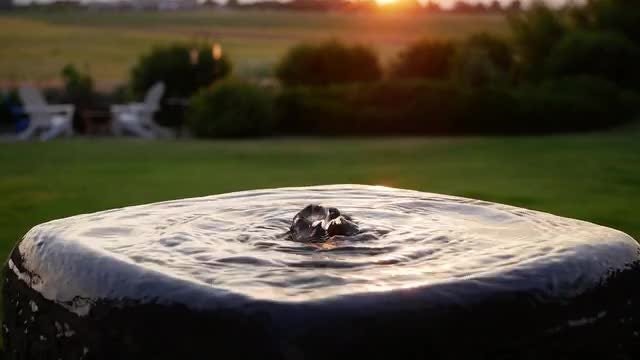 Backyard Water Fountain At Sunset: Stock Video