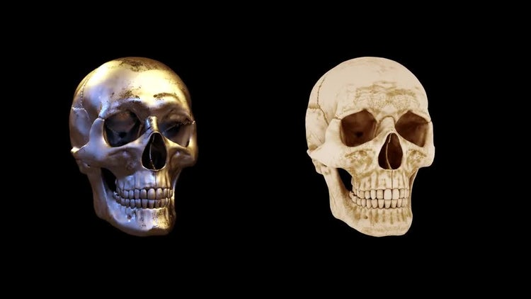 Rotating Skull Pack: Stock Motion Graphics