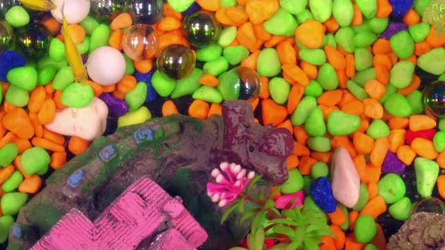 Fish In Aquarium With Colorful Pebbles: Stock Video