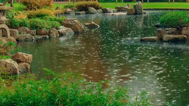 Rain Falling On Garden Pond: Stock Video