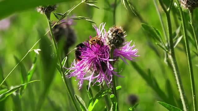 Bee Feeding On A Flower: Stock Video