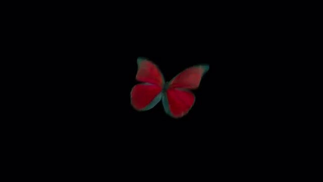 Flying Red Butterfly: Stock Motion Graphics