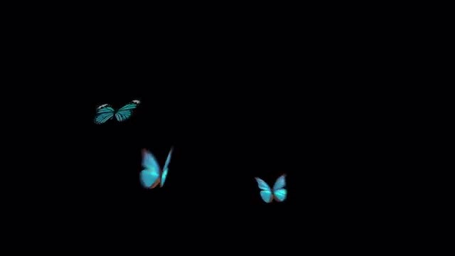 Three Blue Hovering Butterflies: Stock Motion Graphics