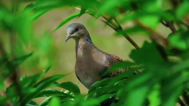 Dove Perched on a Tree: Stock Video