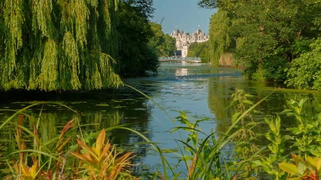 Close-Up Shot Of St James's Park In London: Stock Video