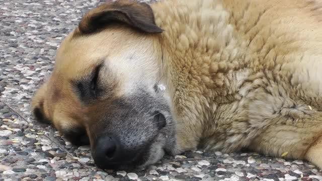 Dog Sleeping On Concrete Floor: Stock Video