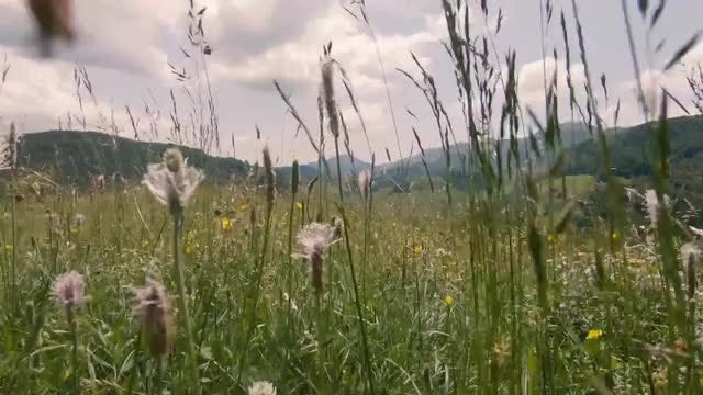 Cinematic Shot Of Meadow: Stock Video