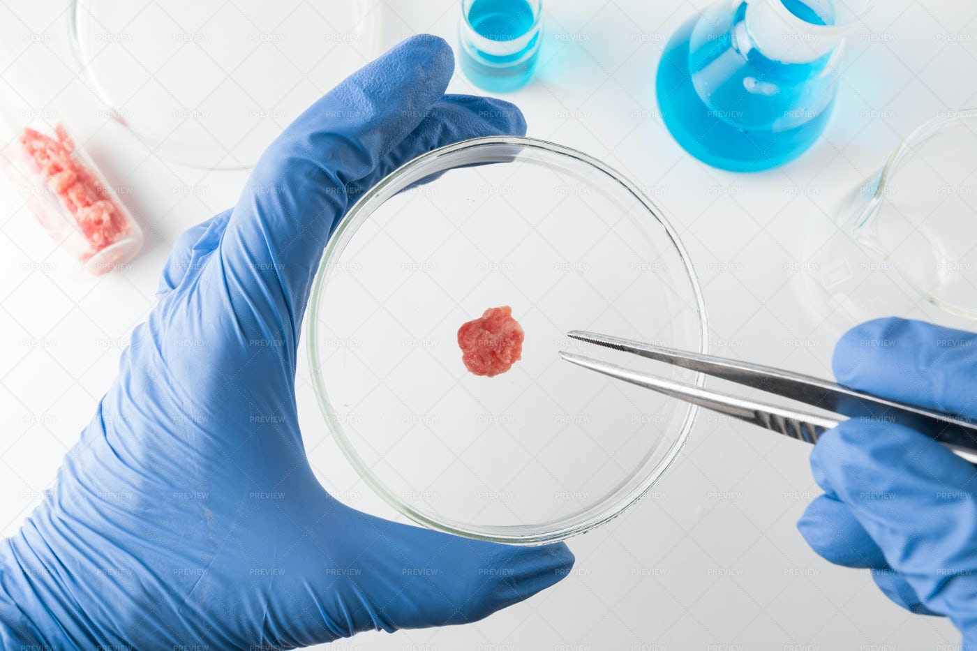 Minced Meat In Petri Dish: Stock Photos