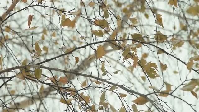 Snow Falling On Autumn Tree: Stock Video