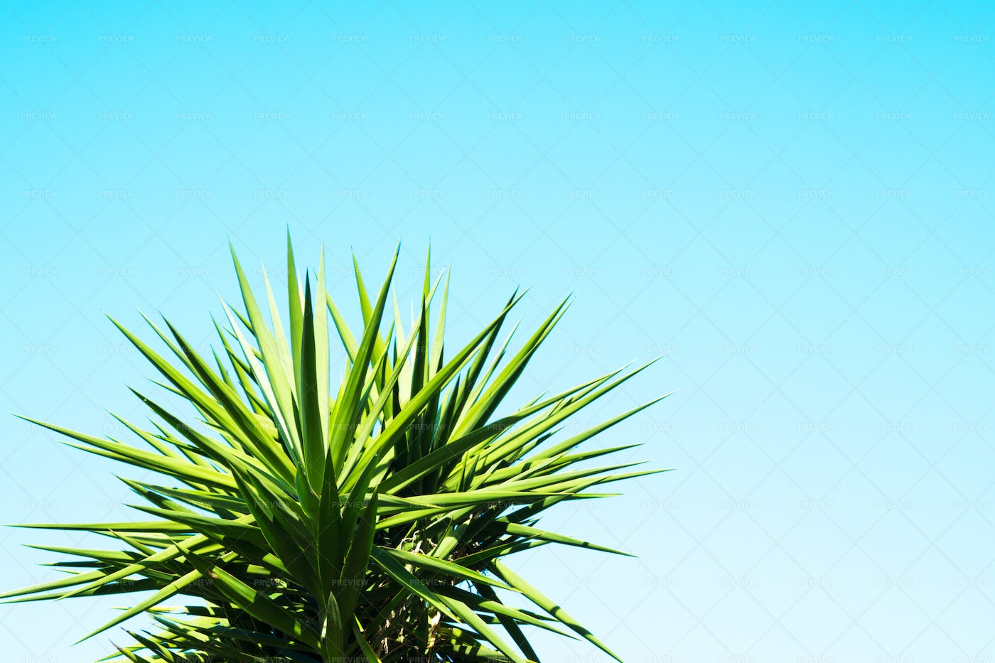 Blue Sky Background With Palm: Stock Photos