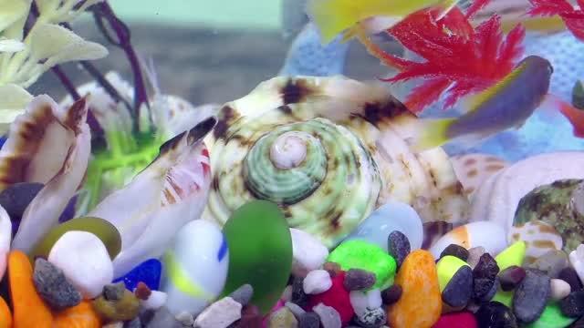 Beautiful Fish In An Aquarium : Stock Video