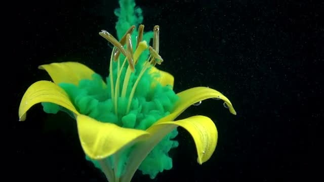 Green Paint On Yellow Flower : Stock Video