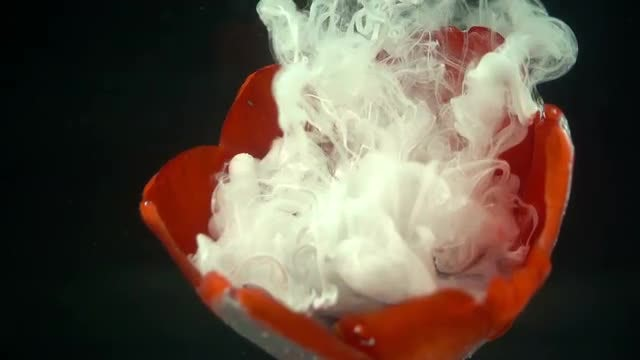 Red Flower And White Paint: Stock Video