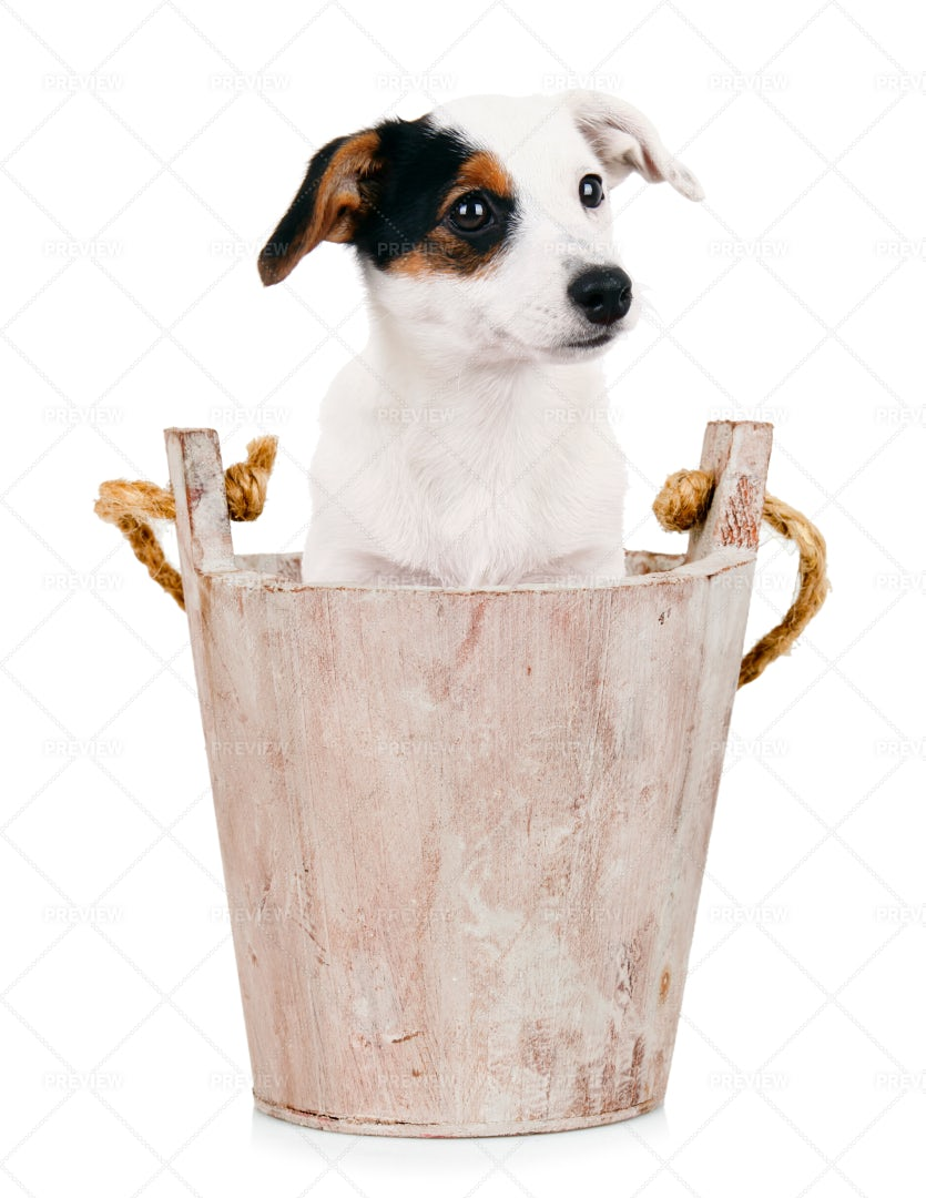 Puppy In Wooden Bucket: Stock Photos