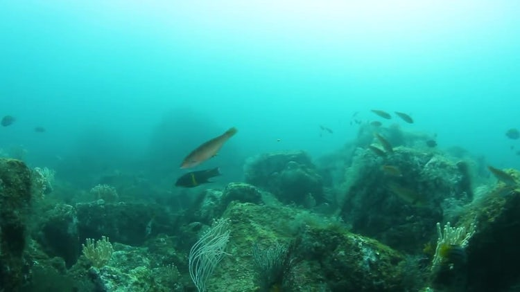 Ocean Reef Point Of View : Stock Video