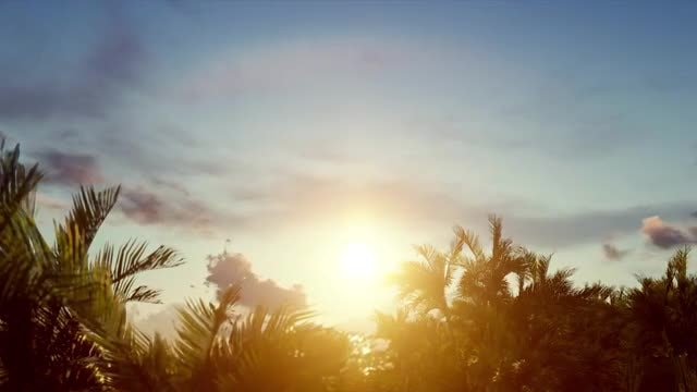 Sunrise Over Palm Trees: Stock Motion Graphics