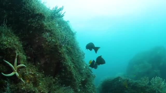 POV Shot Of Coral Reef : Stock Video