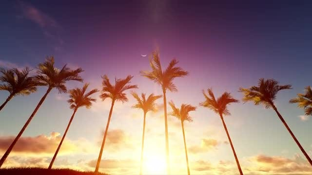 Sunrise Blazing Over Palms: Stock Motion Graphics