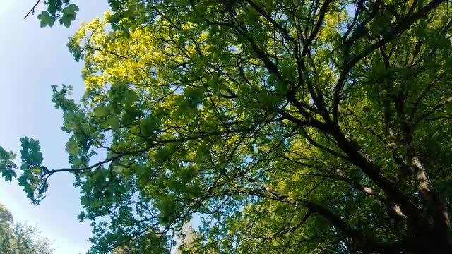 Beautiful Trees Low Angle : Stock Video