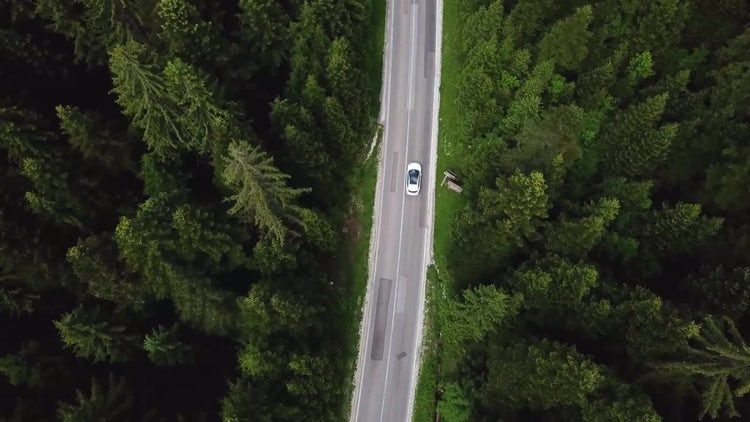 Zooming Through A Forest Road : Stock Video