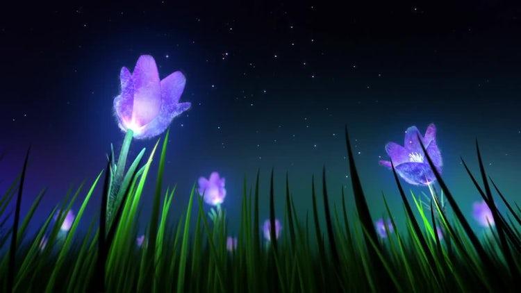 Night Flowers Loop: Stock Motion Graphics