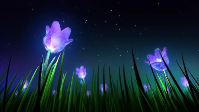 Night Flowers Loop: Stock Motion Graphics