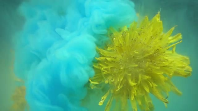Yellow Flower And Paints: Stock Video