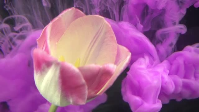Flower And Purple Paints: Stock Video